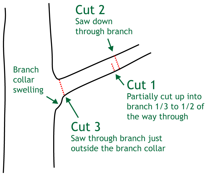 pruning a large branch