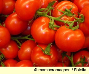 luscious red tomatoes